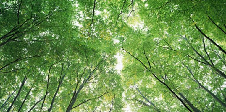 環境管理活動・ISO14001